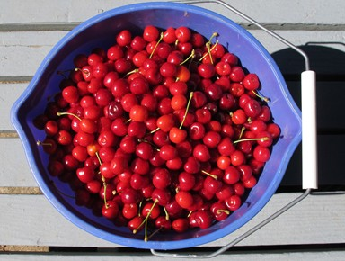 Picked cherries sm